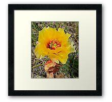 Badlands Cactus Flower Framed Print