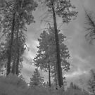 untitled - gopher creek park #4592 by jackson photografix