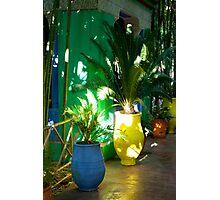 Colouful Pot Plants Photographic Print