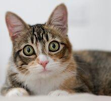 My kitty, Mallory by Kimberly Palmer