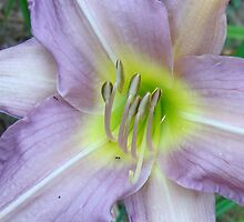 Color Summer... Lavender! by BLemley