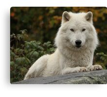 Prince of the forest Canvas Print