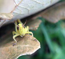 Grasshopper by Cassie Jahn
