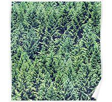 Yuletide Galore - foothills, western Oregon Cascades Poster