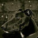 Greyhound x  by Lou Wilson