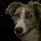 Brighteyes (Greyhound x Collie) by Lou Wilson