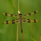 Dragonfly - Halloween Pennant by Gillian Marshall