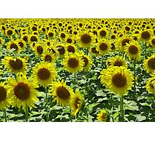 Field Full of Sunshine Photographic Print