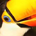 Detailed Portrait of a Toco Toucan at Iguassu, Brazil.  by Carole-Anne