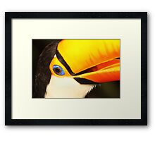 Detailed Portrait of a Toco Toucan at Iguassu, Brazil.  Framed Print