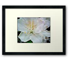 AZALEA - white  ^ Framed Print