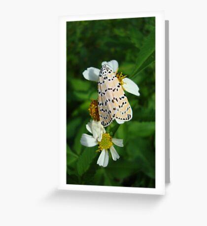 "So delightfully ""bella""!  The beautiful Ornate Bella Moth Greeting Card"