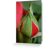 """Tightly in a bud."" Greeting Card"