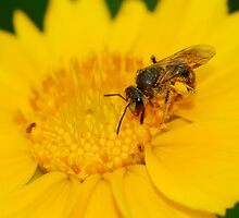 wasp and daisy by davvi