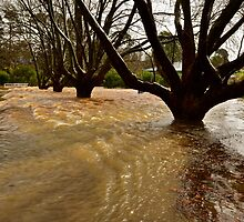 Flooded Dorrigo. by Warren  Patten