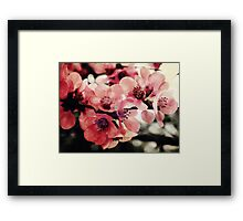 Japanese Quince - Single Branch Framed Print