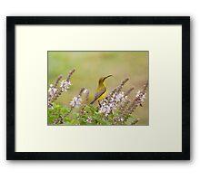 Bird in the Basil Framed Print