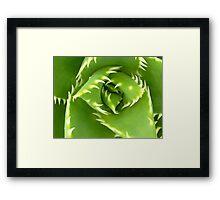 Shark's Tooth Cactus! Framed Print