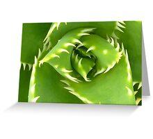 Shark's Tooth Cactus! Greeting Card