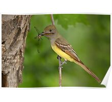 Dragon for Dinner - Great Crested Flycatcher. Poster
