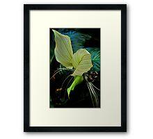 dancing flowers bows Framed Print