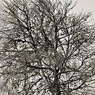 Middle of Winter by Helen Vercoe