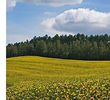 Sunflowers by jasonksleung