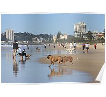 Dogs' Paradise on Palm Beach Poster
