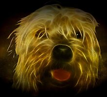 Doggy in the Dark by missmoneypenny