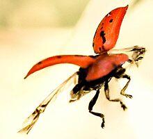 Ladybird Ladybird Fly Away Home by missmoneypenny
