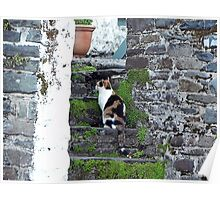 Clovelly Calico Poster