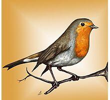 Robin bird Photographic Print