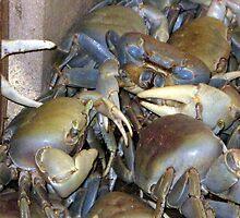 Some crabs by Haydee  Yordan