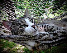 Feline Groovy by Rick Gold