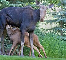 Déjeuner Sur L'Herbe... Moose Twins by A.M. Ruttle