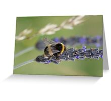 Bumble bee - Lavender  Greeting Card