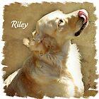Riley by Brenda Boisvert