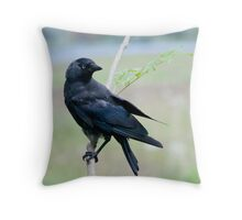 Jackdaw in the rain Throw Pillow