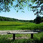 Bench with view on dunes valley by steppeland
