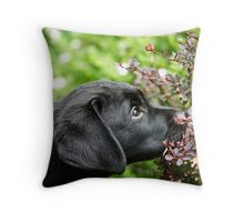 Hmmmm, Barberry Throw Pillow