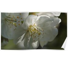 Macro blossom Poster