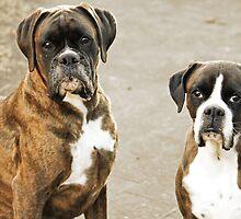 Luthien & Arwen -Boxers Dogs Series- by Evita