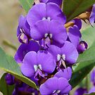 Tree Hovea by Eve Parry