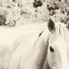 A Horse is a Horse - beautiful palomino in black and white by Erin Johnson