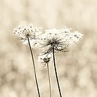 Queen Anne's Lace - Black and White by Erin Johnson