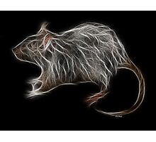 Rat - Chinese Zodiac by Liane Pinel Photographic Print