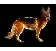 Dog - Chinese Zodiac by Liane Pinel Photographic Print