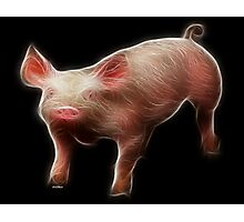 Pig - Chinese Zodiac by Liane Pinel Photographic Print