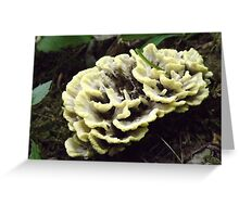 A Wild Guess ~ Thelephora vialis Greeting Card
