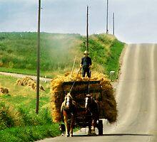 Hay Bales  by Marcia Rubin